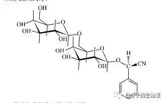 抗体世界-苦杏仁苷化学式