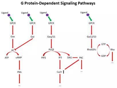 抗体世界-GPCR