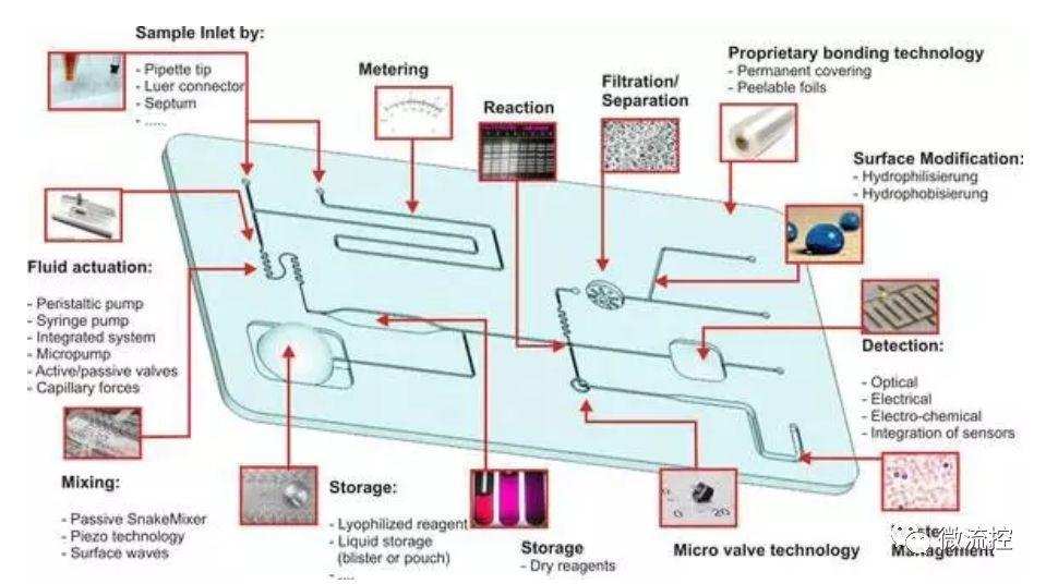 抗体世界-微流控芯片